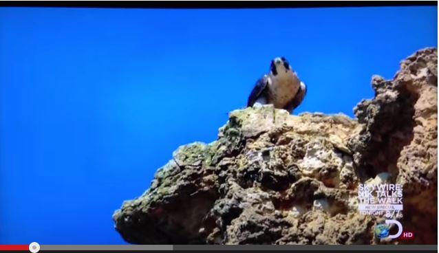 Mama Falcon